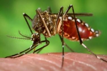 Casos de dengue aumentam mesmo com o frio; mais uma morte é confirmada no Paraná