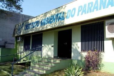 Instituto Ambiental do Paraná abre concurso para 220 vagas; 10 são para Umuarama