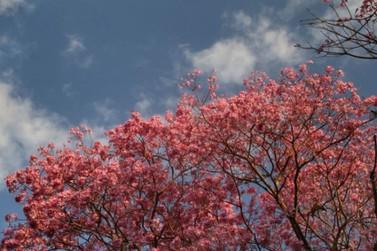 Primavera começa com temperatura amena e sem chuva na região de Umuarama