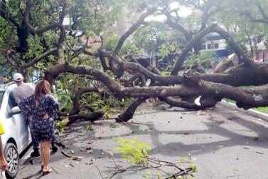 Árvore de grande porte cai e atinge veículos na região central de Umuarama