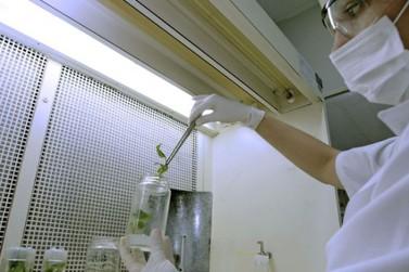 UEM é a primeira no Brasil e segunda no mundo com mais cientistas mulheres