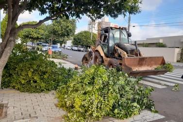 Prefeitura redobra efetivo nas ruas reparando estragos causados por tempestade