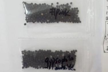 Adapar alerta sobre o recebimento de sementes vindas da China como 'brindes'