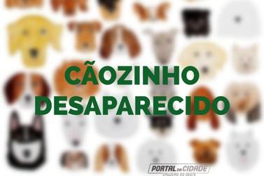 Família procura por cachorro desaparecido em Cruzeiro do Oeste; ajude