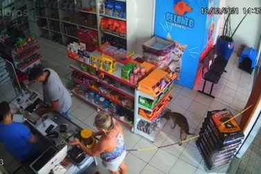 "Cachorro é flagrado ""furtando"" petisco em pet shop"