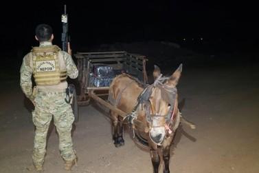 Burro encontrado com 300 kg de maconha, em Guaíra, é devolvido para os donos