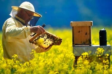 Congresso em Poços oferecerá um dia para debate sobre apicultura