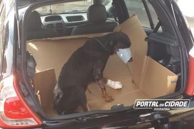 Em Douradina, Voluntários se unem para cuidar de cãozinho abandonado