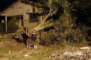Vento forte derruba árvore sobre casa em Douradina