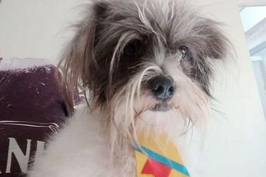 Procura-se cachorro Kadu, desaparecido em Douradina