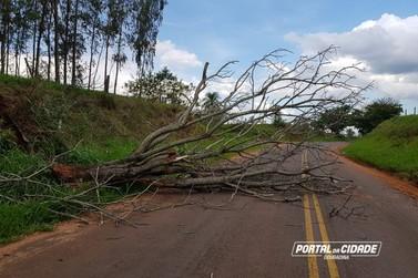 Queda de árvore entre Vila Formosa e Maria Helena deixa trânsito em meia pista
