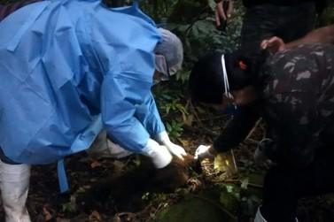 Saúde confirma vírus da febre amarela em macacos mortos
