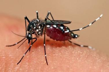 Duas cidades da região noroeste entram na lista de locais em epidemia de dengue