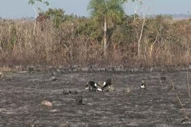 Incêndio no Parque Nacional de Ilha Grande é controlado, diz ICMBio