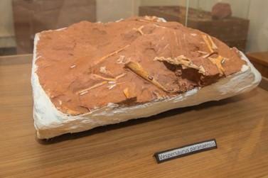 Sítio paleontológico de Cruzeiro do Oeste revelou quatro espécies de dinossauros