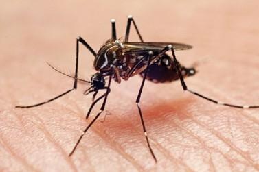 Mulher de 31 anos é primeira vítima fatal de dengue no 2° semestre no Paraná
