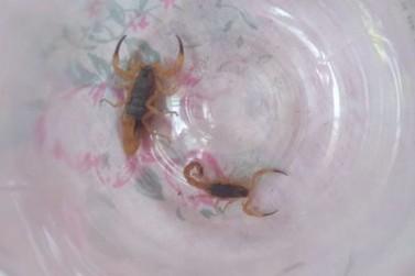 Escorpiões aparece em residência e moradora reclama de terrenos baldios