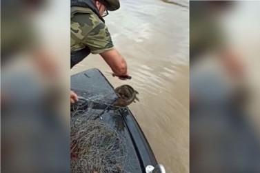 Operação náutica combate a pesca ilegal no Rio Ivaí; com vídeo
