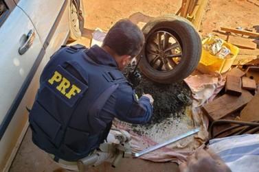 PRF prende homem transportando skunk dentro dos pneus do carro em Alto Paraíso