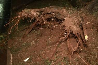 Ventos derrubam semáforo e árvores em Umuarama