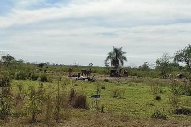 Dono de gado é autuado em R$ 30 mil por criar animais no Parque de Ilha Grande