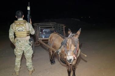 Burro é apreendido transportando 300 quilos de maconha em carroça, em Guaíra