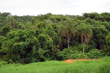 Assentamento de Mariluz vai gerar milhões em royalties com criação de reserva ambiental
