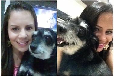 Cão desaparecido em Douradina é encontrado