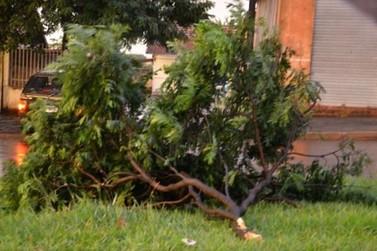 Chuva com forte ventania causa transtornos em Icaraíma