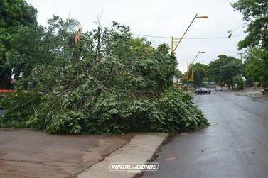 Chuva e vento forte causam estragos em Douradina