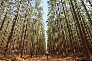 Florestas podem revolucionar a economia na região de Umuarama