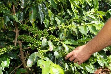 Iapar e Simepar orientam produtores de café para se proteger da geada