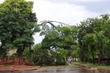 Temporal destelha imóveis, derruba árvores e deixa Icaraíma sem energia