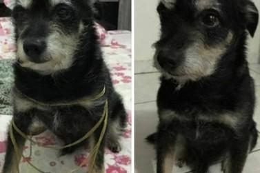 Procura-se cachorro desaparecido