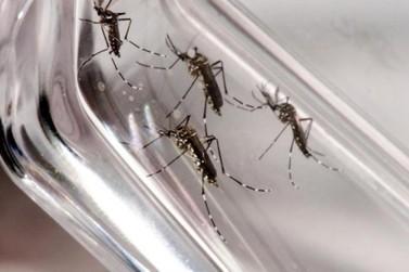 Levantamento mantém Foz do Iguaçu em estado de alerta para a dengue