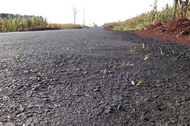Asfalto recém inaugurado pela prefeitura de Foz do Iguaçu já tem mato