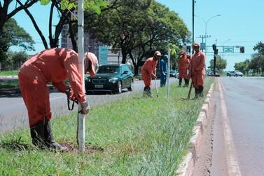 Prefeitura inicia plantio de 2 mil mudas de árvores para compensação ambiental