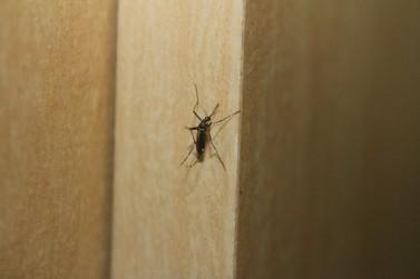 Índice de infestação predial pelo mosquito da dengue chega a 5,4%, diz CCZ