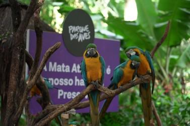 Parque das Aves lança nova narrativa em sua trilha, focada na Mata Atlântica
