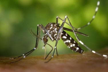 Pesquisa aponta que temperatura alta reduz proliferação do Aedes aegypti