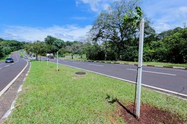 Prefeitura fará o plantio de 20 mil mudas de árvores até o final do ano