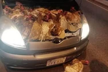 Motorista é detido na aduana com galinhas vivas escondidas no motor do carro