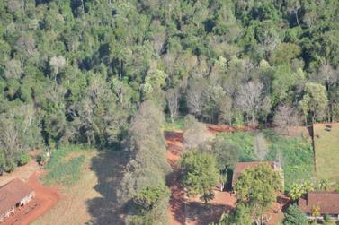 MPF sobrevoa antiga Estrada do Colono e constata regeneração da floresta