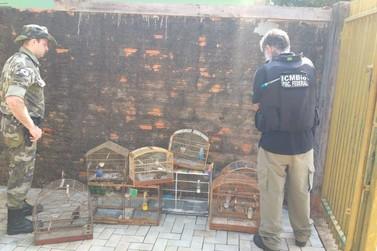 Operação do ICMBio e Polícia Ambiental apreendem 17 aves silvestres
