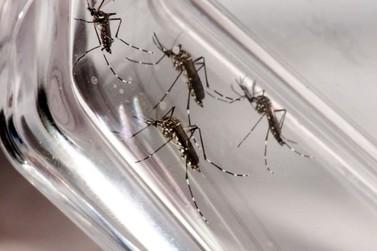 Foz do Iguaçu registra a primeira morte por dengue, diz Secretaria de Saúde