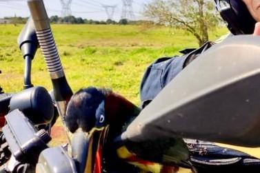 """Tucano pega """"carona"""" em motocicleta de equipe da Polícia Rodoviária Federal"""