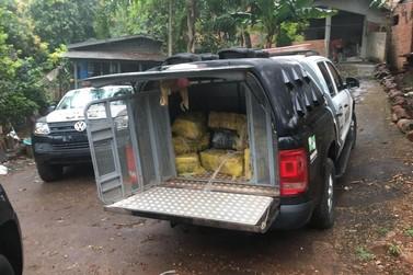 Polícia Civil apreende 537 kg de maconha às margens do Rio Paraná, no Jupira