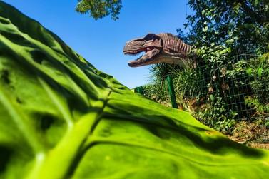 Confira 7 motivos para visitar os atrativos do Dreams Park Show em Foz do Iguaçu