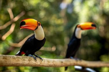Parque das Aves tem novo horário de funcionamento a partir de 27 de abril