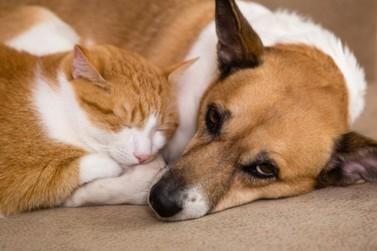 Prefeitura de STI lança programa de castração e microchipagem de cães e gatos